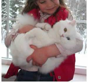 Adorable Persian Kittens for sale - Perth - Cats for sale