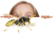 Residential & Commercial Bug Busters of Pest Control in Perth