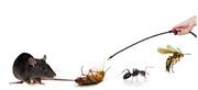 Pest Control consultation Perth