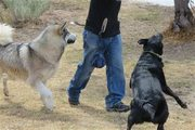 Change your Dog Behavior Problems in Australia