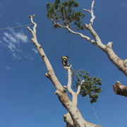 Emergency Tree Removal Services  in Perth
