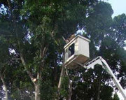 Get Help with Local Tree Services in Perth