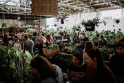 Perth - Huge Indoor Plant Warehouse Sale - 2nd Birthday Bash
