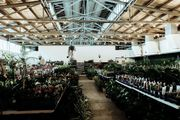 Perth Virtual Pop-up shop - Huge Indoor Plant Sale