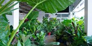 Perth - Huge Indoor Plant Warehouse Sale - Rumble in the Jungle