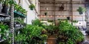 Perth - Huge Indoor Plant Warehouse Sale - Low Light Party